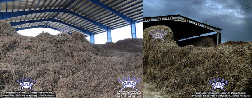 Iran Licorice Sepidan Osareh Factory Root