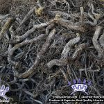 Licorice Liquorice Root glabra